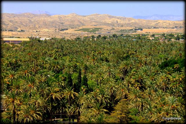 Vista del palmeral desde la basílica Santa María.