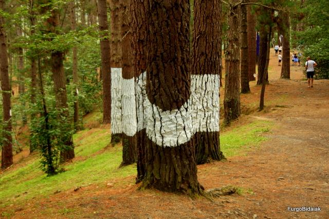 Curvatura óptica del árbol central.