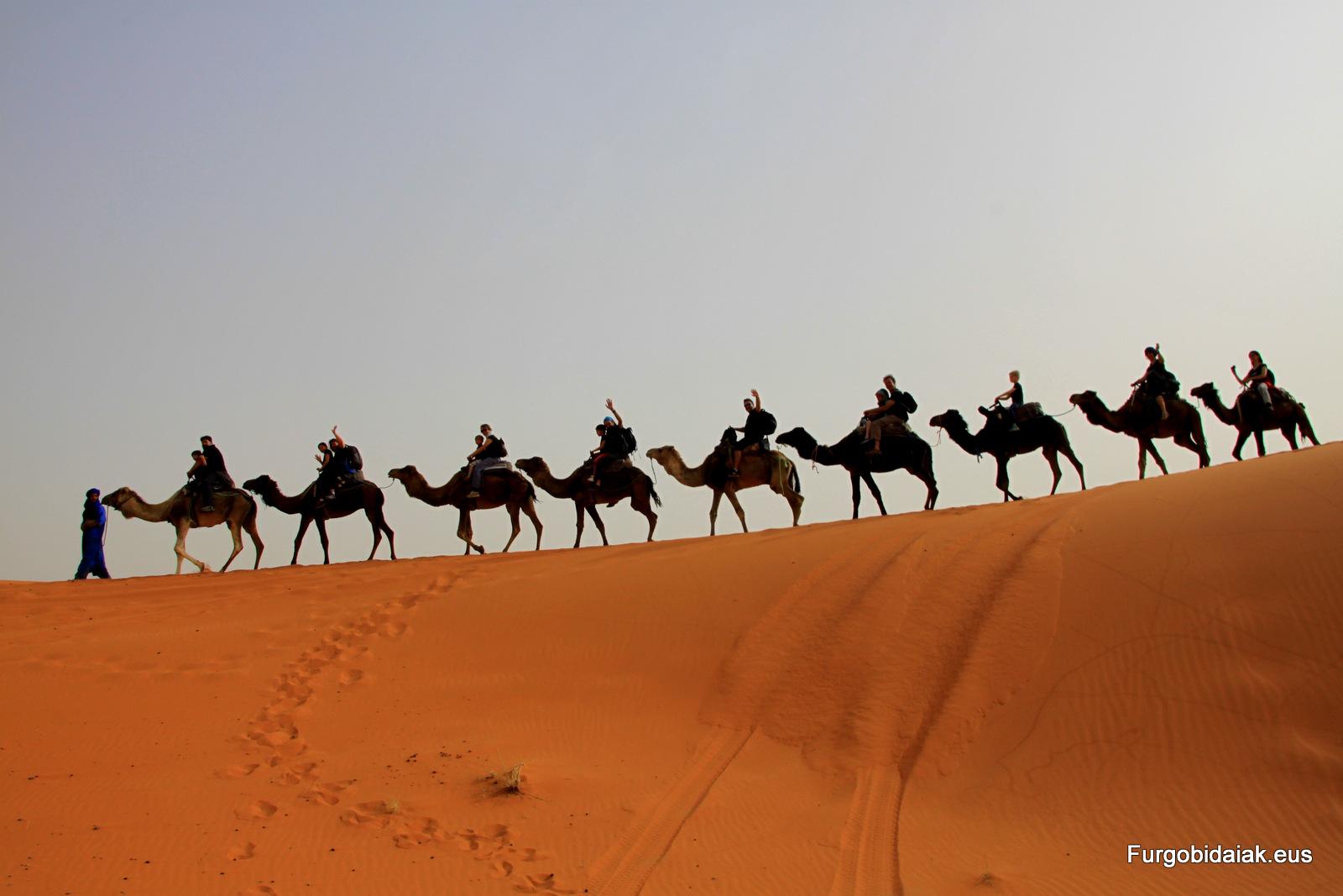 caravana de camellos Sahara Marruecos