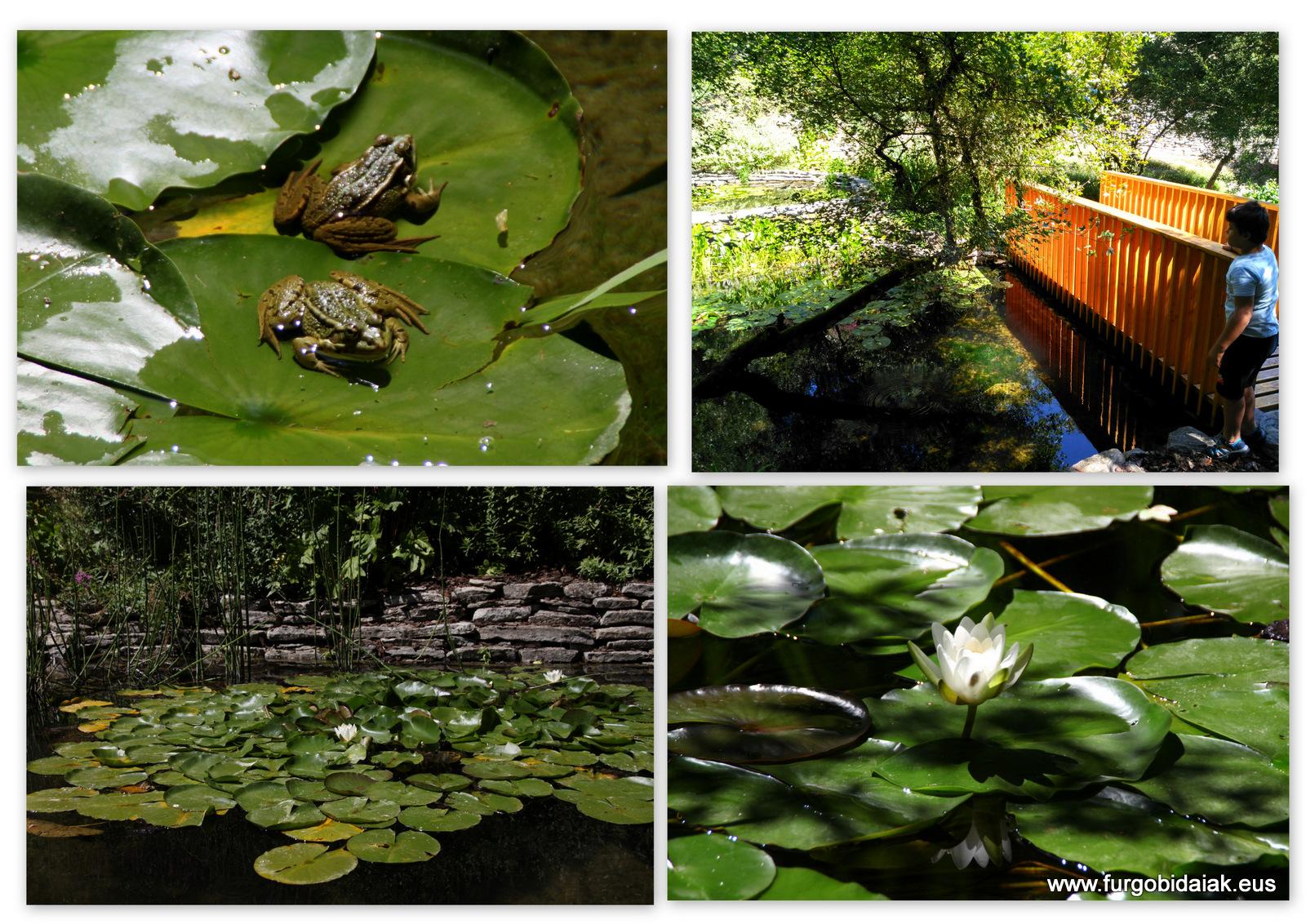 Jardín botánico Santa Catalina de Badaia, espacios húmedos