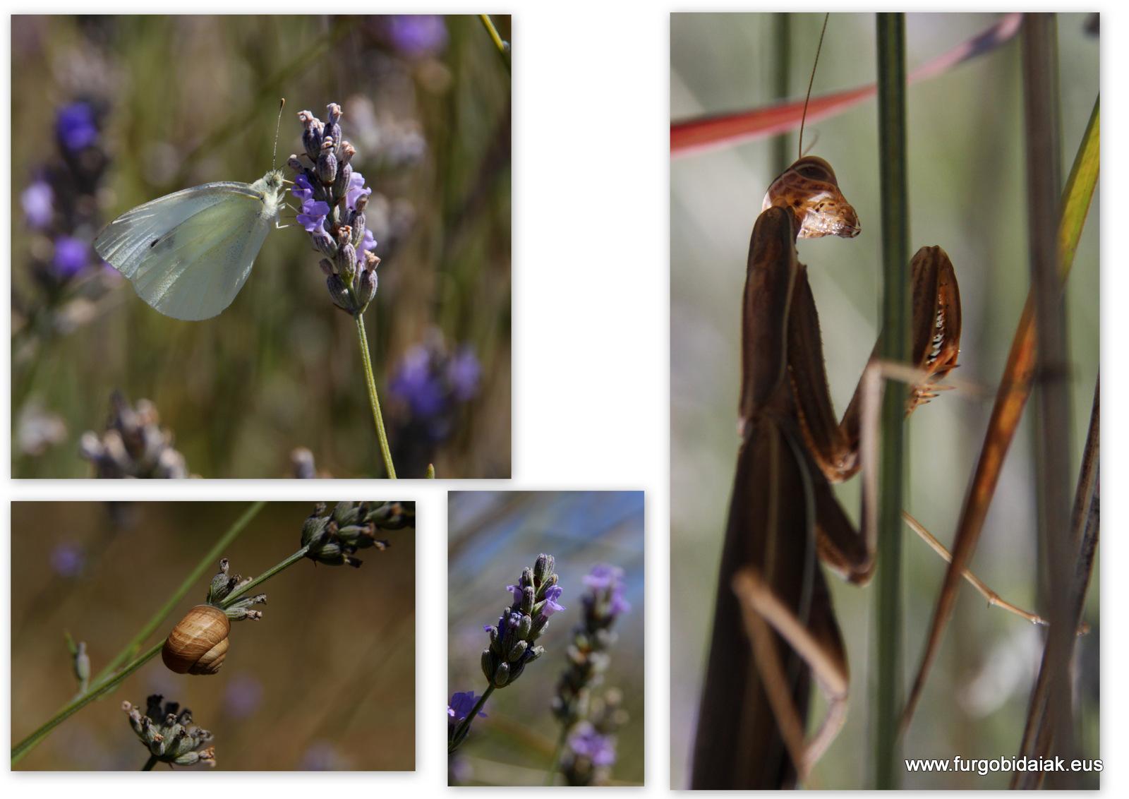 Jardín botánico Santa Catalina de Badaia, hierbas aromáticas