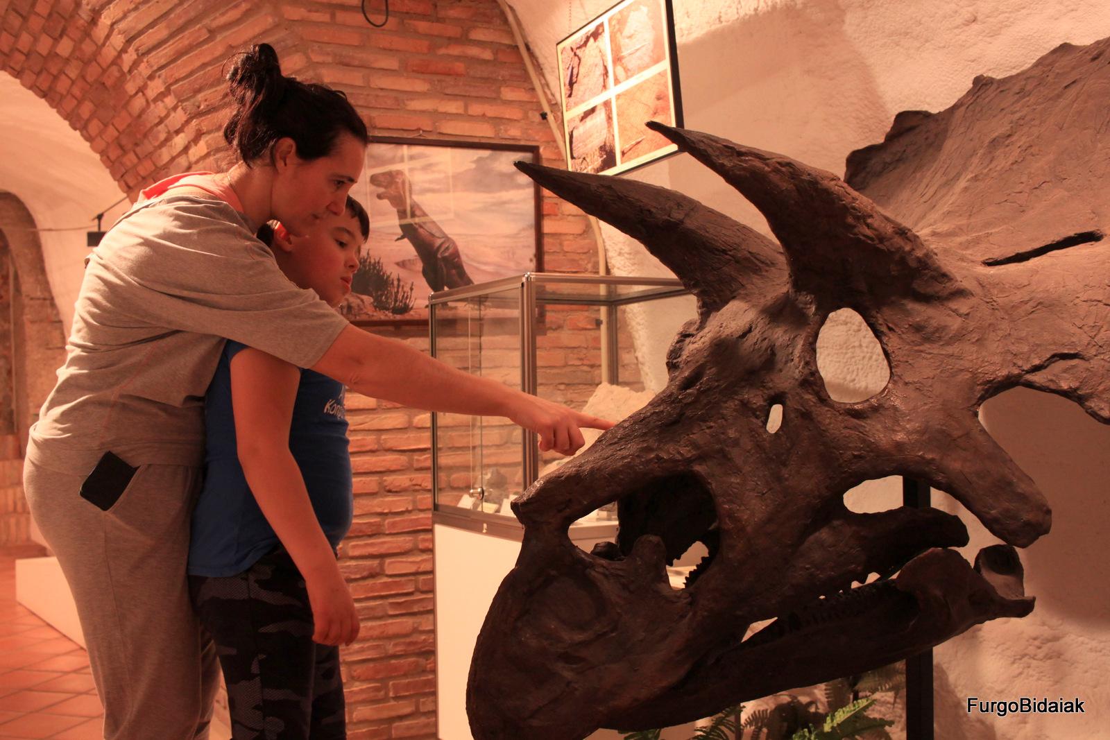 Ruta de los dinosaurios, Museo de Ciencias de Arnedo, cráneo de triceratops