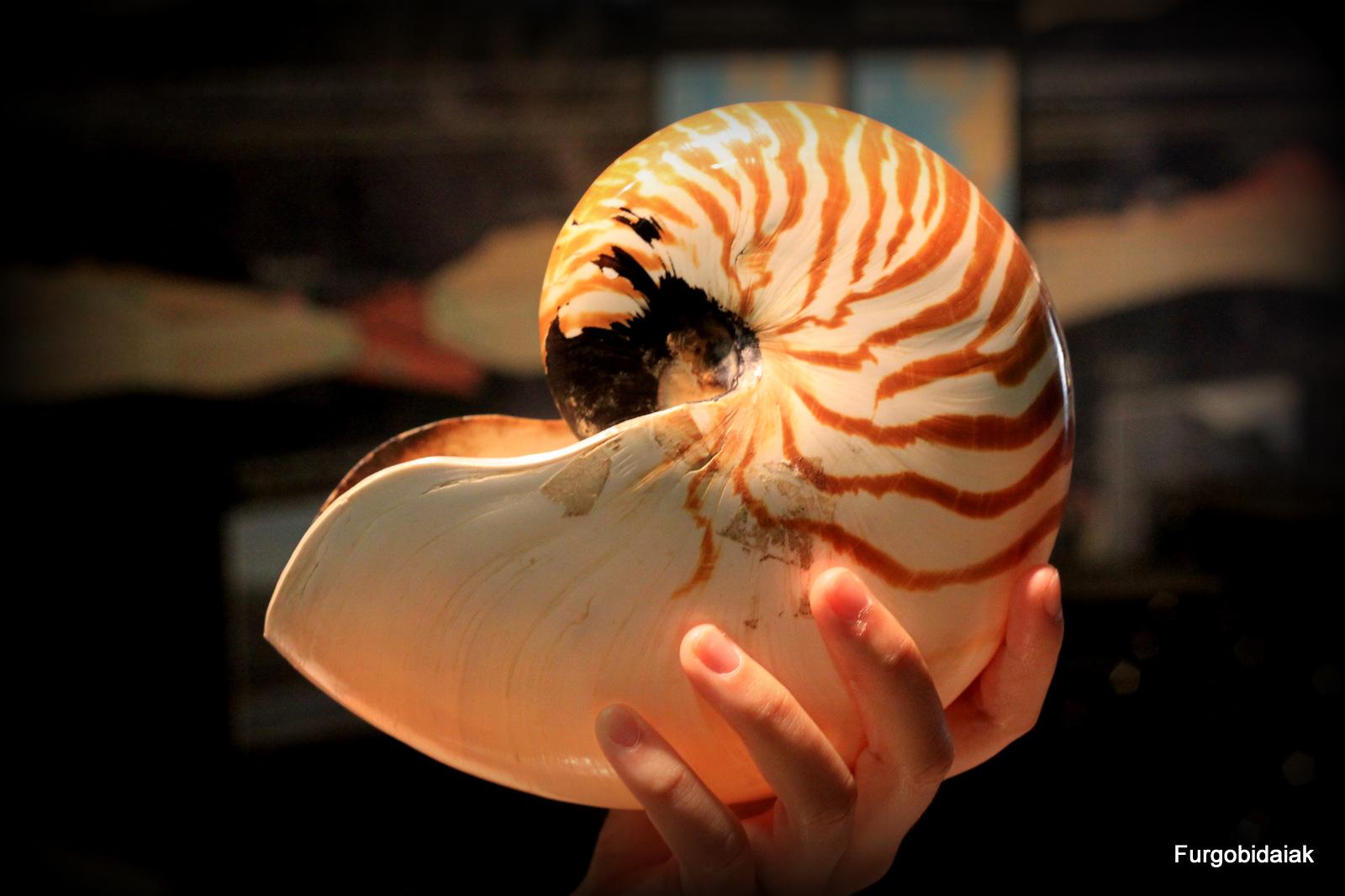 Nautilus, museos vascos, Mutriku