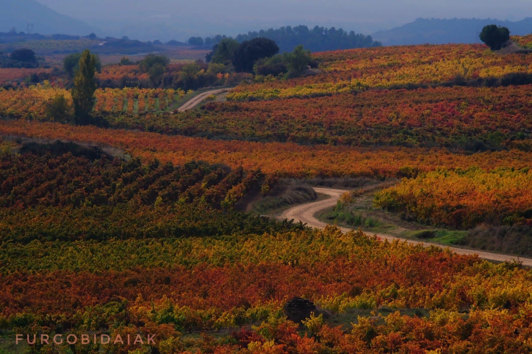 Bodegas Baigorri, amanecer entre viñedos, Rioja Alavesa