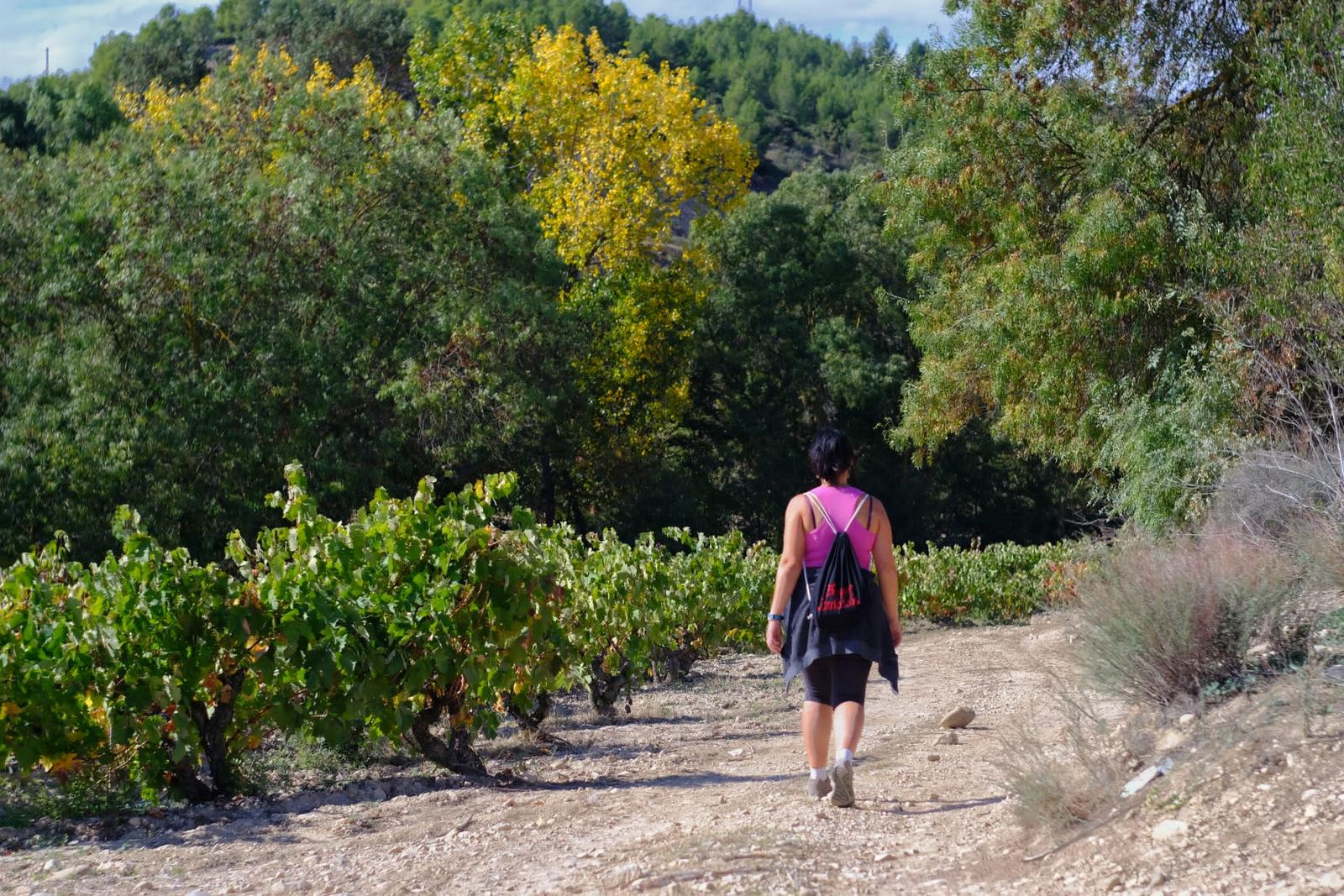 Entre viñedos, Elciego, Rioja Alavesa
