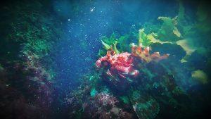 Immersion Astillero, Bahía de Pasaia